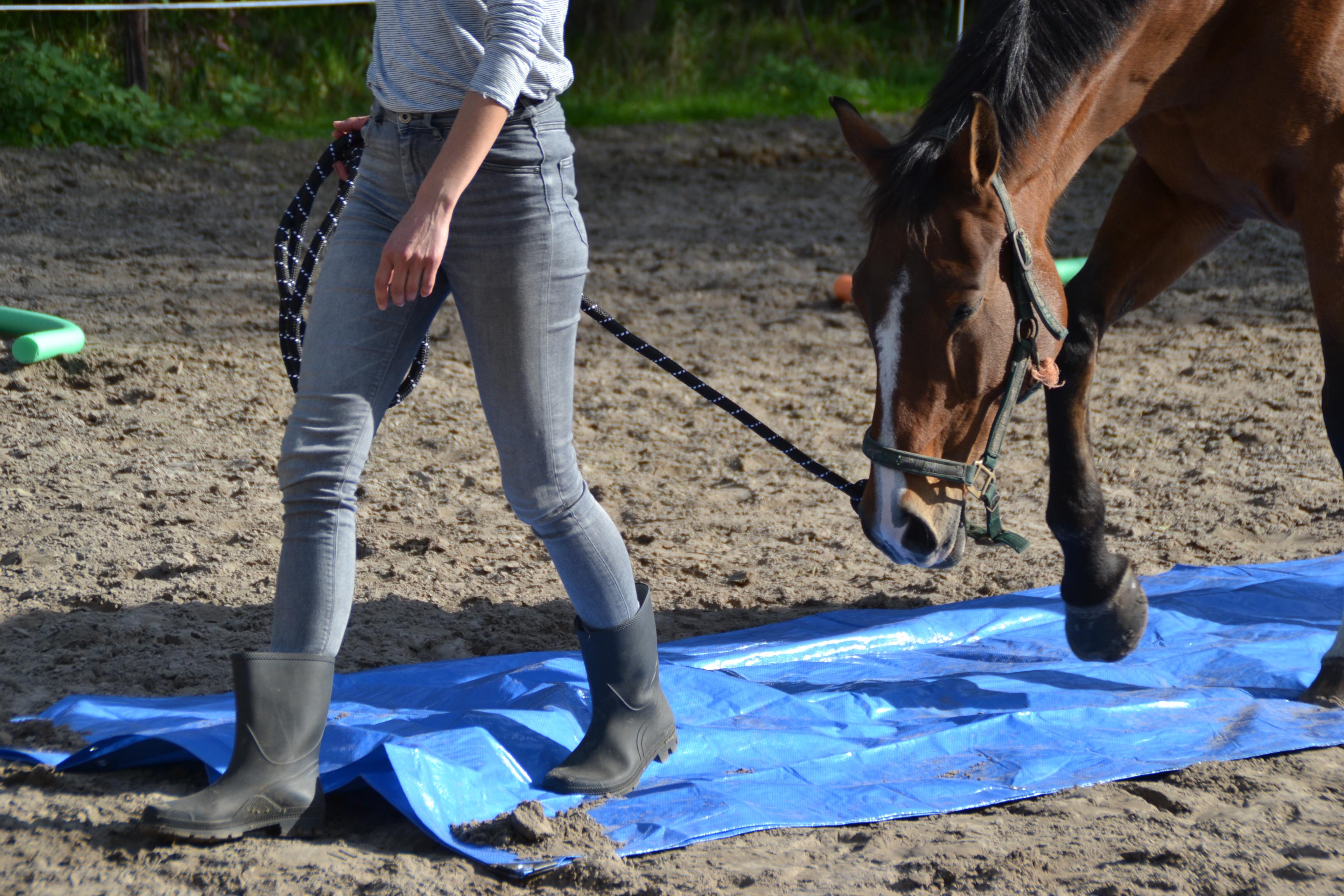 Paardencoaching voor teams